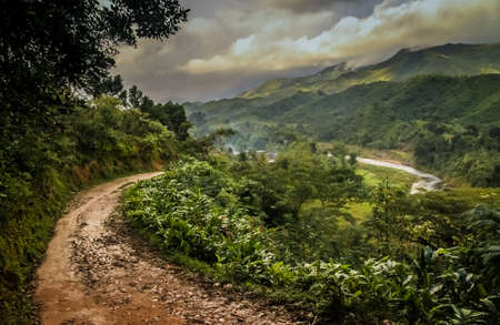 Path through dense madagascar rainforest near Masoala National Park