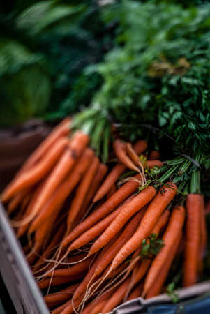 Bunch of organic carrots on sale on a farmers market in South London photo