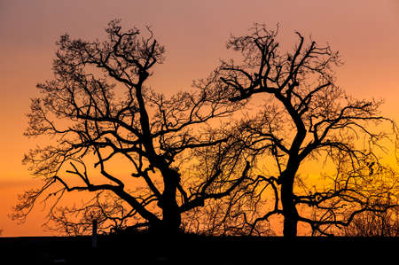 Silhouette of the park trees at sunset photo