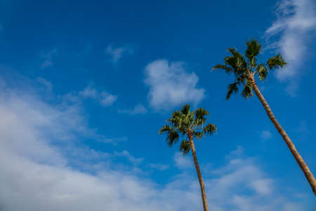 palmtrees: Two tropical palmtrees with the blue sky in the background