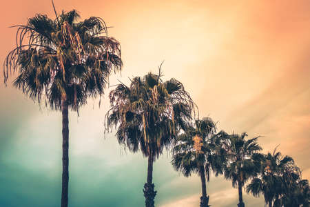 palmtrees: Tropical palmtrees with the colorful sky in the background