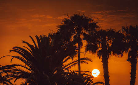 palmtrees: Sunset over palmtrees in  the Natural Reserve of Dunes of Maspaloma in Gran Canaria