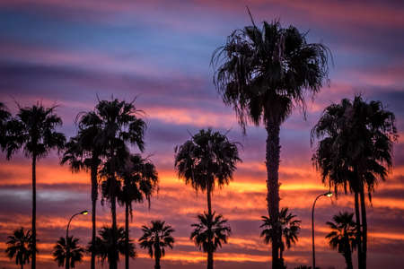 palmtrees: Dramatic sunset over palmtrees in gran Canaria