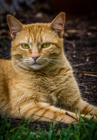 sitting on the ground: Portrait of a cute furry cat sitting on the ground Stock Photo