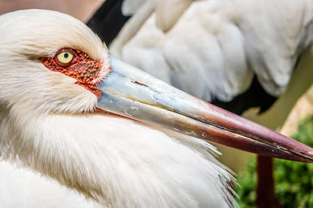 Stork close up photographed in the Palmitos park in Gran Canaria 스톡 콘텐츠