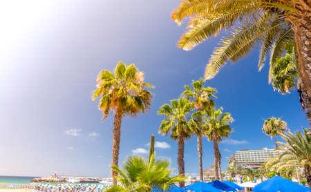 Palmbomen op het strand in het PuertoRico Gran Canaria Canarische Eilanden Spanje