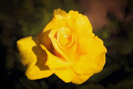 impression: Painting impression of the bud of beautiful yellow rose