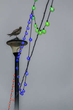 beine spreizen: Seagull sitting on a lamppost among colourful festive lights