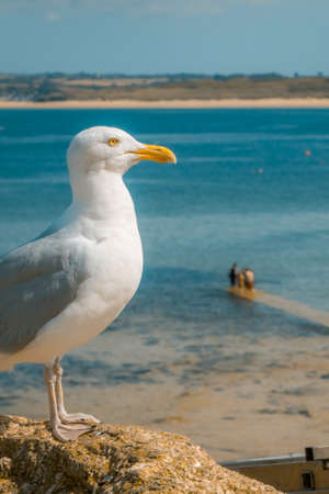 admiring: Seagull sitting on a rock and admiring sea view