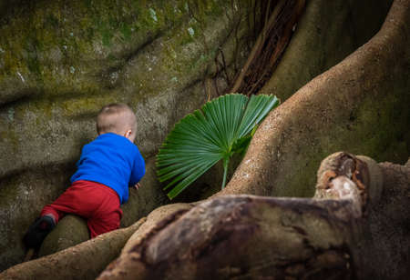Little boy climbing the giant roots of a fig tree in the José do Canto Botanical Garden in Ponta Delgada, Sao Miguel island, Azores, Portugal