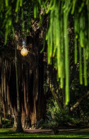 municipal: Lamppost in a Municipal Garden in Ponta Delgada, Sao Miguel island, Azores, Portugal Stock Photo