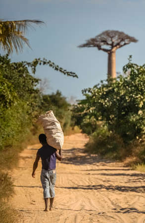 Malagasy man carrying large sack and walking on a sandy road going through the Avenida the Baobab near Morondava in Madagascar. Picture taken in July 2010 in Western Madagascar Editorial