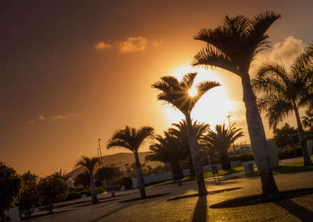 palmtrees: View of the palmtrees growing in a holiday resort in the southern Lanzarote