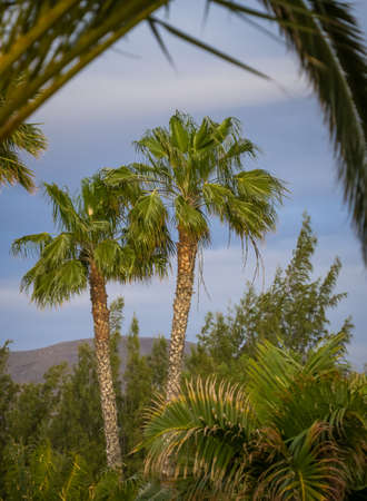 palmtrees: View of the palmtrees in the southern Lanzarote Stock Photo