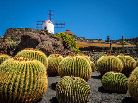 archtecture: Old windmill turned museum and large round cactuses in the Cactus Garden designed by Cesar Manrique, Lanzarote, Canary Islands, Spain