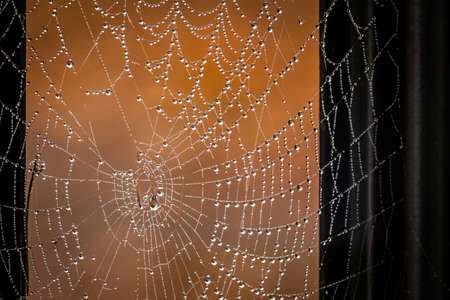 Morning dew drops on a spider web Stock Photo