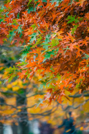 Red, green yellow and orange leaves on trees on an autumn day in a park Stock Photo