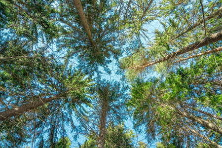 treetops: Treetops in a forest Stock Photo