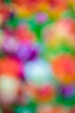 diagonal: Defocused and blurred abstract colorful background of a field of colorful tulips