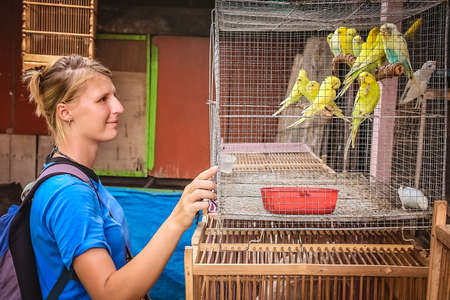 Girl looking at yellow parrots for sale in a livestock market in Yogyakarta, Java, Indonesia Stock Photo