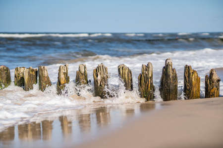 stakes: Old wooden breakwaters on the Baltic coast beach
