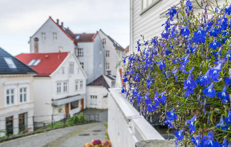 Blue flowers on the balcony of one of the traditional old wooden houses on the hillside in the old part of Bergen town, Norway