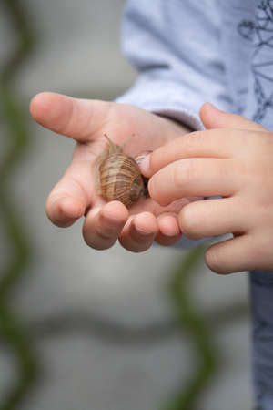 Little boy holding large snail in his hand and playing with it
