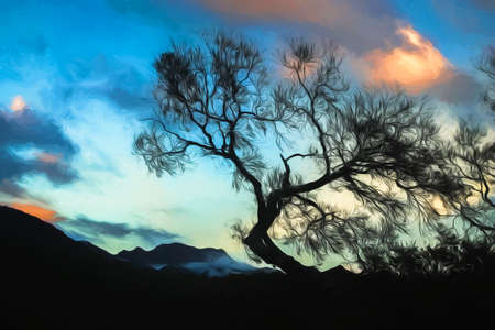 Leafless tree with the cloudy background photographed in late autumn in New Zealand