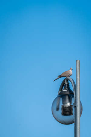 Grey pigeon sitting on a lamppost with blue sky in background Foto de archivo - 97862900