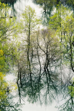 Green trees reflected in the shallow shore waters of the Skadar Lake, Skadar Lake National Park, Montenegro