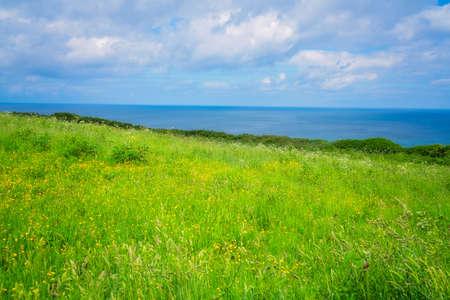 Landscape of the green rural Cornish hillside meadow, Cornwall, England, UK