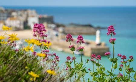 Flores rosas y amarillas en frente de la bahía y la playa de desenfocado en St. Ives, Cornwall, Inglaterra, Reino Unido, Europa