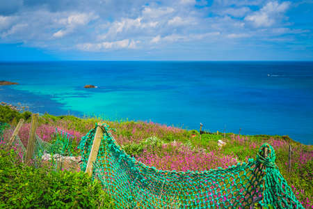 Green net fence surrounding rural garden with Pink sea thrift flowers growing on a meadow, Cornish coast, Cornwall, UK Stock Photo