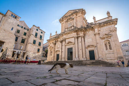 Dubrovnik, Croatia - April 2018 : Cat walking in front of the old historical building in the Dubrovnik Old Town