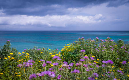 Colorful yellow and purple flowers on a meadow over Alykes Beach in Zante Island, Greece