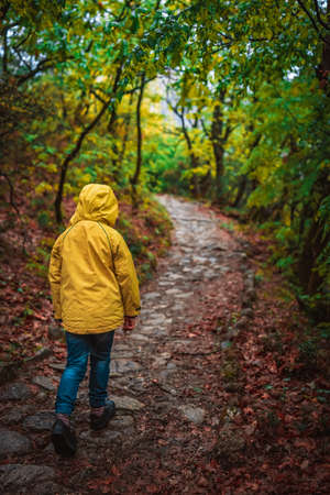 Young Caucasian girl wearing yellow waterproof jacket walking on a narrow path in a forest in autumn 免版税图像