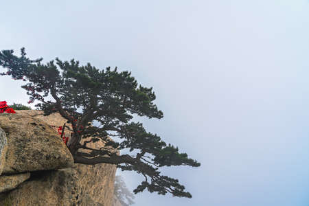 The lonely pine tree growing on the precipice of the inspiring, sacred and majestic Huashan mountain, famous tourist attractions, Shaanxi province, China