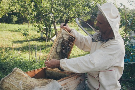 A beekeeper works with the bees and the hives in the apiary. a man in a protective suit at the apiary. Employee pulls the frame from the hive. a man pulls out the honeycomb with honey. Summer harvest Stock Photo