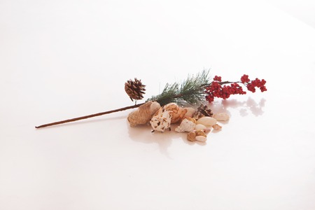 cone, fir branch, cranberries, shells on a white background. Isolated photo