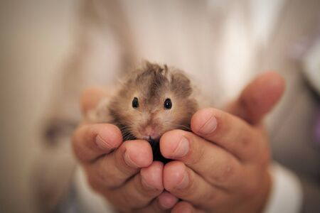 Hamster in hand. Pet protection concept, Alternative medicine, Allergy