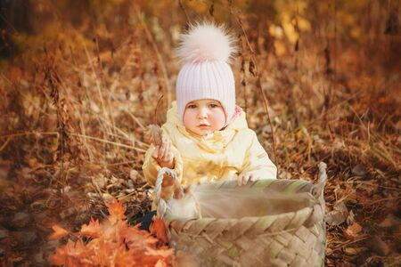a small child in a warm suit walking in woods. The girl collect leaves in basket autumn Park. The concept of walking in fresh air, picking fruits: mushrooms, vegetables