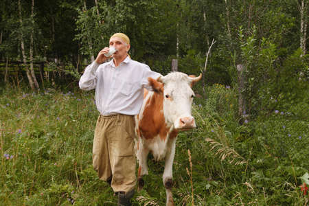 a man grazes a cow in a green meadow. cattle eat grass. The farmer drinks milk from a glass. healthy food: village milk. A pensioner takes care of cattle Stok Fotoğraf