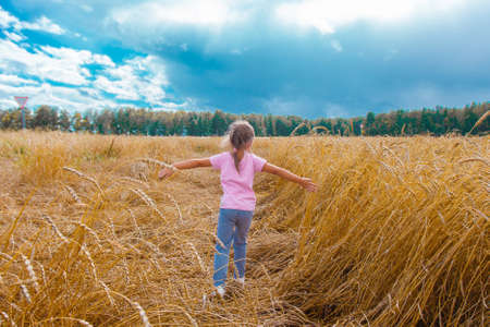 Harvest: ripe wheat grows in the field. The golden grain and the children are walking. girls in the grass