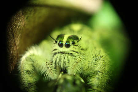 eight legs: cute little green spider catch with macro lens Stock Photo