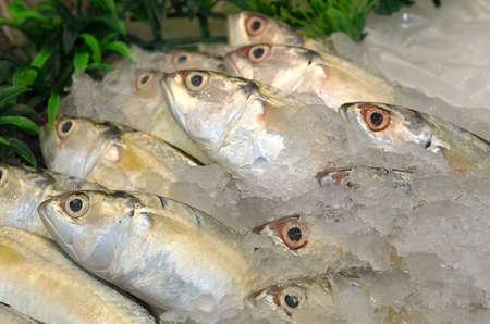 Frozen fish on ice at market photo