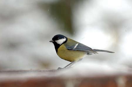 bird on snow photo