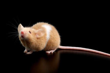 mouse on black background  Stock Photo - 12146132