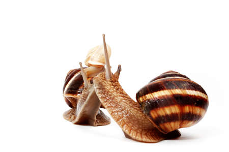 two garden snails and a small snail,representing a family photo
