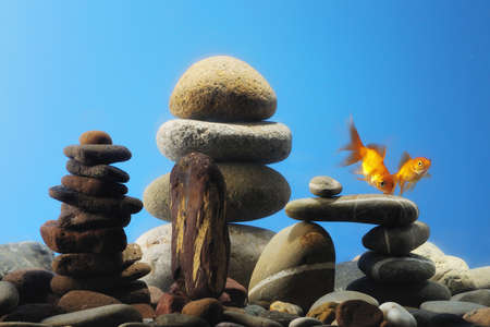 couple goldfish in aquarium over well-arranged zen stone photo