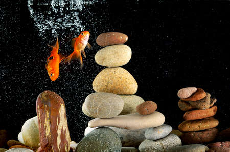 couple goldfish in aquarium over well-arranged zen stone and nice bokeh of bubbles Stock Photo - 12805317